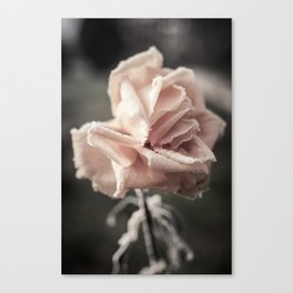 Roses in the Winter Canvas Print