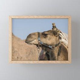 a camel in the desert of israel on the border of egypth Framed Mini Art Print