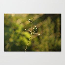 Wild garden flower Canvas Print