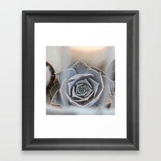 Cactus in Birdcage Framed Art Print
