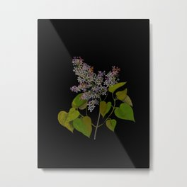 Syringa Vulgaris Mary Delany Delicate Paper Flower Collage Black Background Floral Botanical Metal Print