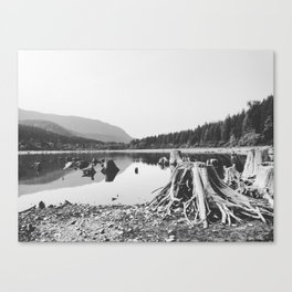 Sea of Stumps Canvas Print
