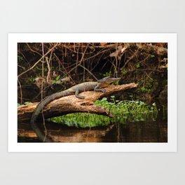 Gator in a Louisiana Swamp Art Print
