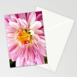 Padre Cerise Belgian Mum Stationery Cards