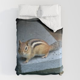 Chip on the Block: Adirondack Chipmunk Comforters