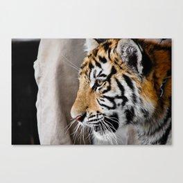 Tiger cub in profile Canvas Print