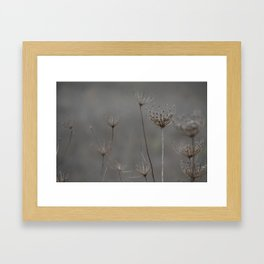 Queen's Anne's lace Framed Art Print