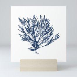 Ocean Coral Print, Coral Art Print, Marine Art, Minimalist Art, Coral Fan Art Print, Nautical Art Prints, Beach Decor, Nautical Art, Beach Decor, Sea Fan, Nautical, Nautical Decor, Nautical Art Print, Nautical Art, Navy Blue Mini Art Print