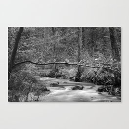 watercourse in december black and white Canvas Print