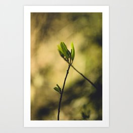 Spring at Nesmith Point Art Print