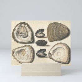 Vintage Oyster and Mussel Illustration, 16th Century Mini Art Print