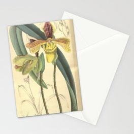 Flower 8126 paphiopedilum villosum annamense Stationery Cards