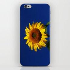 Sunflower Sunshine iPhone & iPod Skin