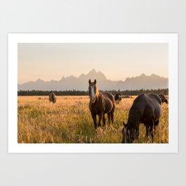 Horses Grazing Below the Tetons Art Print