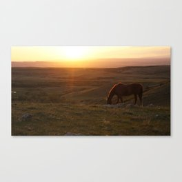 Ranch Sunset Canvas Print