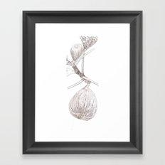 Ficus carica Framed Art Print