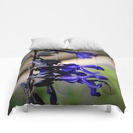 Black and Blue Salvia Comforters
