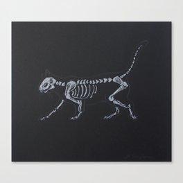 Cat Skeleton Canvas Print