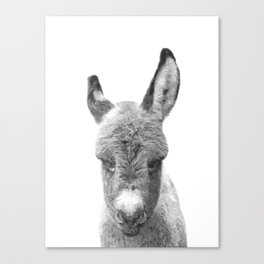 Black and White Baby Donkey Canvas Print