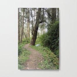 Path Through a Eucalyptus Forest Metal Print