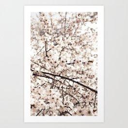 Light Blossoms Art Print
