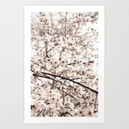 Light Blossoms Art Print