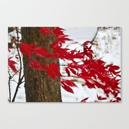 like a river of red Canvas Print