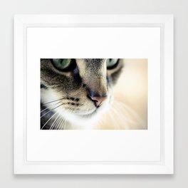 The Cat's Whiskers Framed Art Print