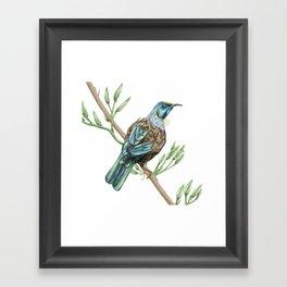 New Zealand Tui bird Framed Art Print