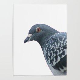 Peace Bird Poster