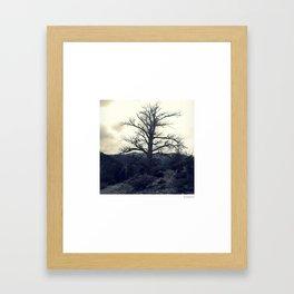 Mt Charlie's Tree Framed Art Print