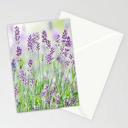 Lavender in summer garden Stationery Cards