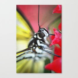 BFX | nourishing woodnymph (butterfly) Canvas Print