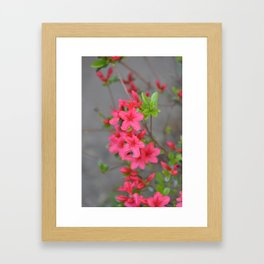 Beautiful Spring Flowers Framed Art Print