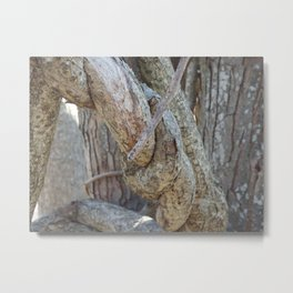 tree knot Metal Print