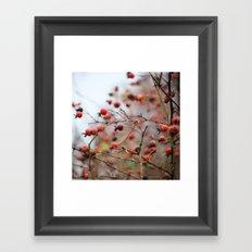 Winter Rosehips Framed Art Print