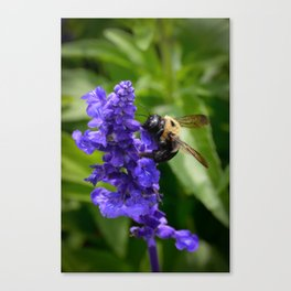 Bumble Bee on Veronica Spike Speedwell Flower by Teresa Thompson Canvas Print
