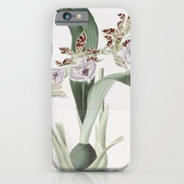 Flower 1433 eulophia mackaiana Mr Mackay s Eulophia15 iPhone Case