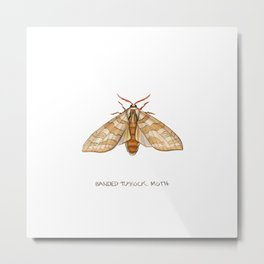 Banded Tussock Moth Metal Print