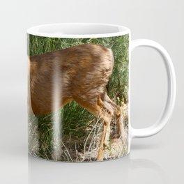 Mule Deer At Zion Park Coffee Mug