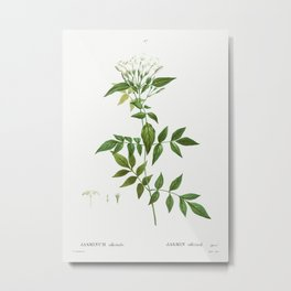 Jasmine (Jasmin officinale) from Traité des Arbres et Arbustes que l'on cultive en France en pleine Metal Print