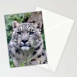 Leopard20151202 Stationery Cards