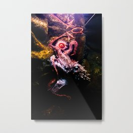 Keeping the octopus occupied Metal Print