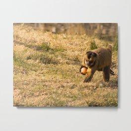 Monkey Business III Metal Print