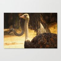 ostrich Canvas Prints featuring Ostrich by Unfocussed