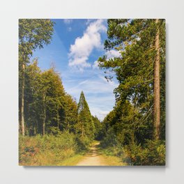 Woodland walk Metal Print