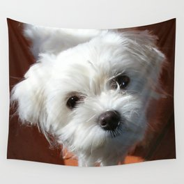 Cute Maltese asking for a treat Wall Tapestry