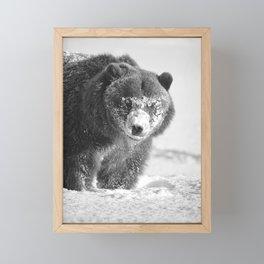 Alaskan Grizzly Bear in Snow, B & W - 3 Framed Mini Art Print