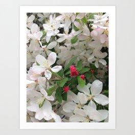 Spring, blooming Art Print