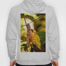 The leaf Hoody